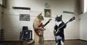 Kediler Öğretmen Olursa
