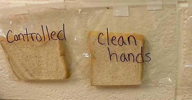 Öğretmenin Ekmek Deneyi: Çocukların Ellerini Neden Yıkamaları Gerektiğini Gösteriyor. Deneyin Sonu Korkunç :o