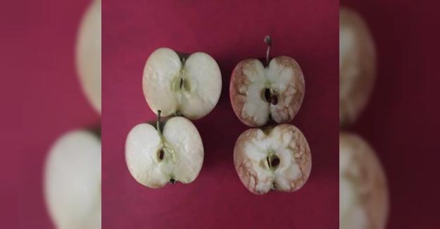 Zorbalık Hakkındaki Korkunç Gerçekliği Anlatmak İçin Elmaları Kullanan Öğretmen