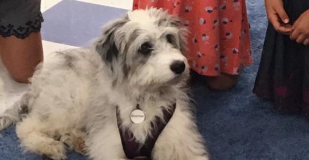 Bir köpeği okula getirmek