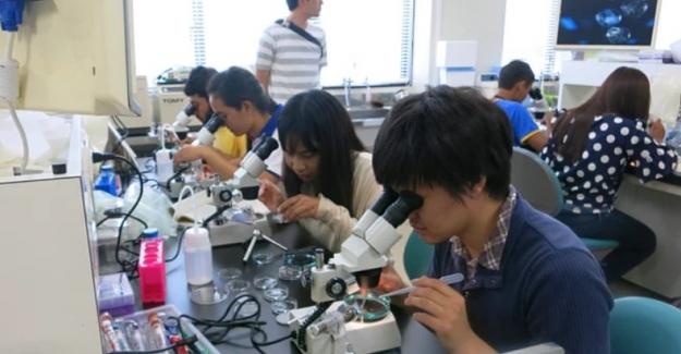 Zorlu Ama Başarılı Bir Eğitim Sistemi: Japonya Eğitim Sistemi