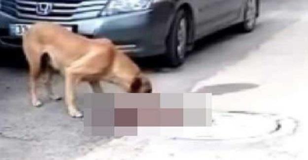 Kadın öğretmen, annelerini emen yavru köpekleri aracıyla ezdi