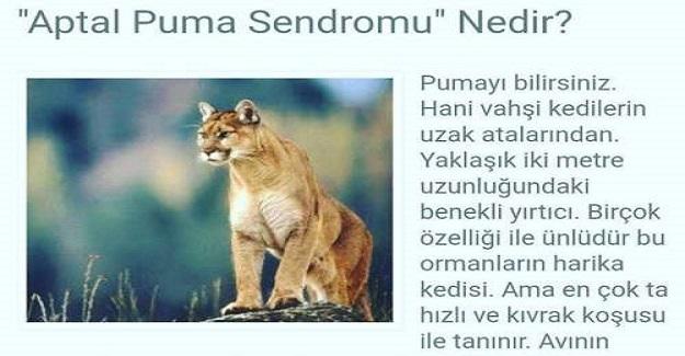 Bir Çoğumuzun Fark Etmeden Düştüğü Psikolojik Hata: Aptal Puma Sendromu