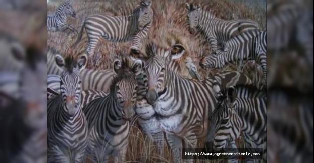 Fotoğrafa bakınca ilk gördüğünüz hayvan bakın ne anlama geliyor
