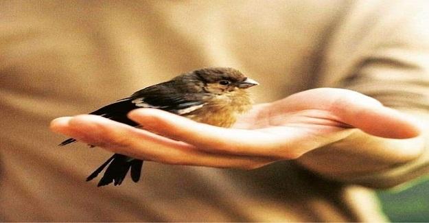 Kuşun Üç Öğüdü