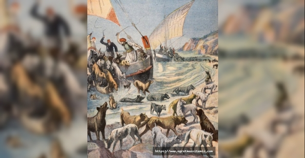 TARİHİN YÜZ KIZARTAN KÖPEK SÜRGÜNÜ: HAYIRSIZ ADA'DA ÖLÜME TERKEDİLEN 80 BİN KÖPEĞİN HİKAYESİ