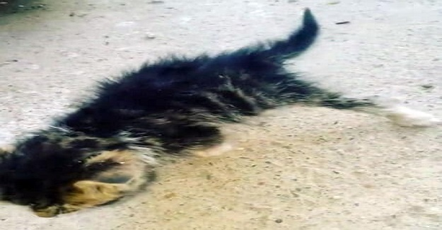 Ölümü Bekleyen Felçli Kedinin İmdadına Öğretmen ve Öğrencileri Yetişti