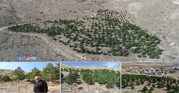 """HER AĞAÇ SAHİBİNİN ADINI YAŞATACAK """"Bu köyde herkesin bir dikili ağacı var"""""""