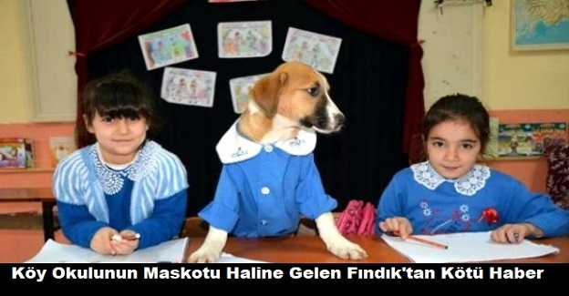 Köy Okulunun Maskotu Haline Gelen Fındık'tan Kötü Haber