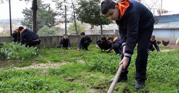 Öğrenciler Üretim Dersini Bostanda İşliyor