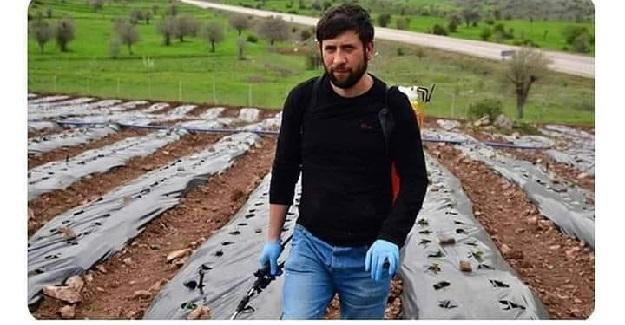 Üniversite Öğrencisi Murat Ceylan Girişimcilik Dersi Ödevi İçin Yaptığı Araştırmalarla Organik Çilek Tarlası Oluşturdu