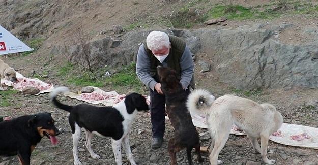 Emekli Öğretmen Sokak Hayvanlarının Tedavilerini Yapmak İçin, Veterinerlik Bölümünü Bitirdi