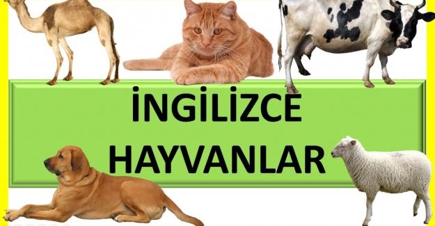 İngilizce Hayvan İsimleri Okunuşu ve Yazılışı Nasıldır?