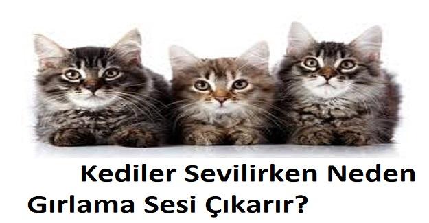 Kediler Sevilirken Neden Gırlama Sesi Çıkarır? Kediler Neden Gaz Yapar?