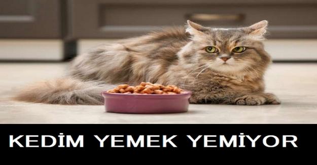 Kedim Yemek Yemiyor? Ne Yapabilirim?