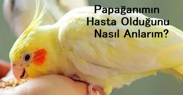 Papağanımın Hasta Olduğunu Nasıl Anlarım?