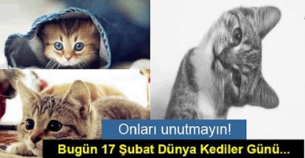 17 Şubat Dünya Kediler Günü