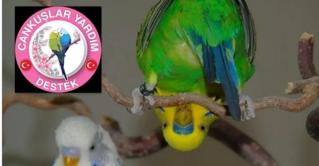 Muhabbet Kuşları Hangi Sıcaklıkta Bakılmalı