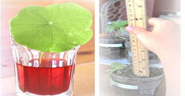 Bitkilerle Yapılacak Deneyler