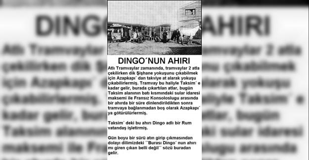 Dingo'nun Ahırı Deyiminin Anlamı ve Hikayesi