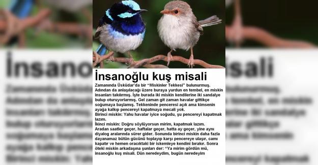 İnsanoğlu Kuş Misali Deyiminin Anlamı ve Hikayesi