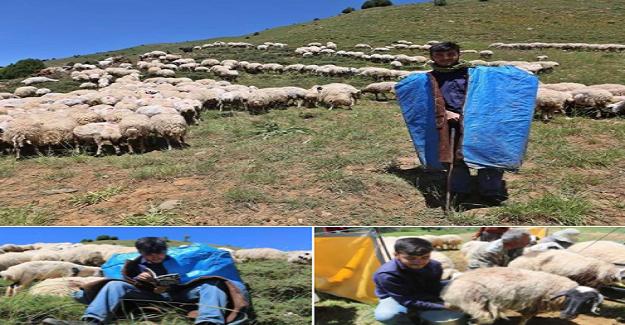 Bir Başarı Hikayesi: Çobanlık Yaparken Robert Lisesini Kazandı, Şimdiki Hedefi Tilburg Üniversitesi