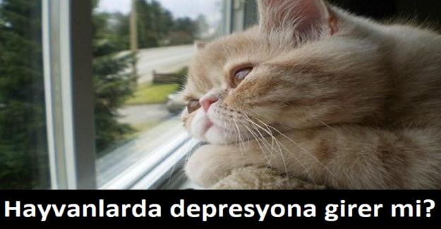 Hayvanlarda depresyona girer mi?