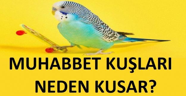 Muhabbet Kuşları Neden Kusar ?