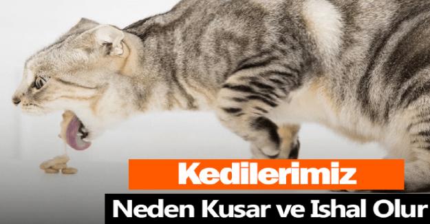 Kediler Neden Kusar? Kedilerin Kusma Nedenleri Neler?