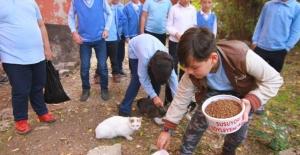 Edirne Uzunköprü'de bir ilkokul öğrencisi sosyal sorumluluk ödevi kapsamında para toplayarak sokak hayvanlarına mama alıp onları elleriyle besledi