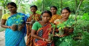 Ezber Bozduran Bir Köy: Piplantri
