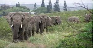 2 Mart 2012'de Afrika'daki bir...