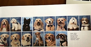 Bu Okul, Terapist Köpeklerine Çekim Yapan Bir Park Kitabı Sayfasına Özel