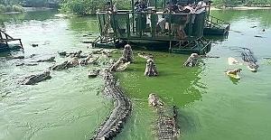 Şirket o yıl personel gezisini Tayland'' daki bir timsah çiftliğine yapmıştı.