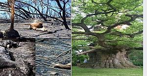 Üç gün yandı İzmirNe ağaçlar yandı Ne hayvanlar öldü,Ne hayvanlar yuvasız kaldı, Artık bir şeyler değişmeli, yenilenmeli.