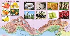 Akdeniz Bölgesinde Yetiştirilen Tarım Ürünleri Nelerdir?