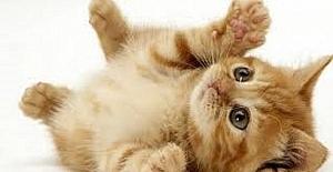 Evde Kedi Bakımı Nasıl Olur? Kedilere Hangi Yaşta Hangi Mama Verilmeli?