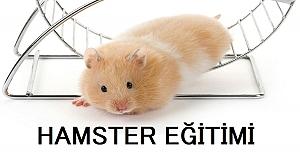 Hamster Eğitimi Nasıl Yapılır?