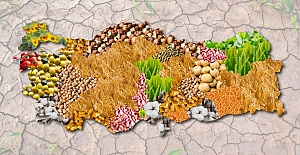 Karadeniz Bölgesinde Yetişen Tarım Ürünleri Nelerdir?