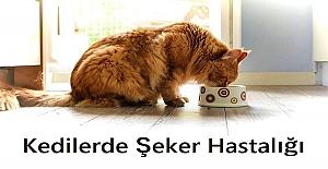 Kedilerde Şeker Hastalığı Nasıl Anlaşılır? Kedilerde Şeker Hastalığı Belirtileri Nelerdir?