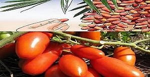 Meyve Ve Sebzelerin Olgunlaşma Tarihleri? Hangi Meyve Sebze Hangi Ayda Yenir?