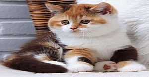 Kedilerin Yaptığı Akıl Almaz Şeyler?