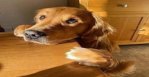 Eğer bir köpek senin öğretmenin olsaydı, şöyle şeyler öğrenirdin