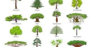 Ağaç ve Bitki Türleri Adları Alfabetik