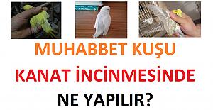 Muhabbet Kuşu Kanat İncinmesinde Ne Yapılır?