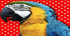 Papağanlar Nasıl Konuşur?