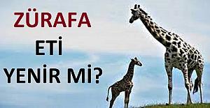 Zürafa Eti Helal mi ? Zürafa Eti Yenir mi ?